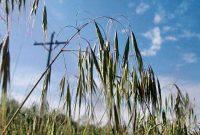 Photo courtesy of weedimages.org
